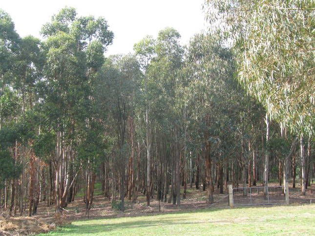 Albury Wodonga Golf Driving Range, Wodonga, Victoria, Australia