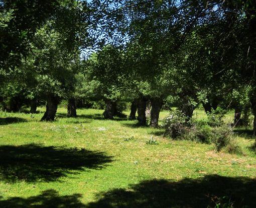 Patones, Community of Madrid, Spain
