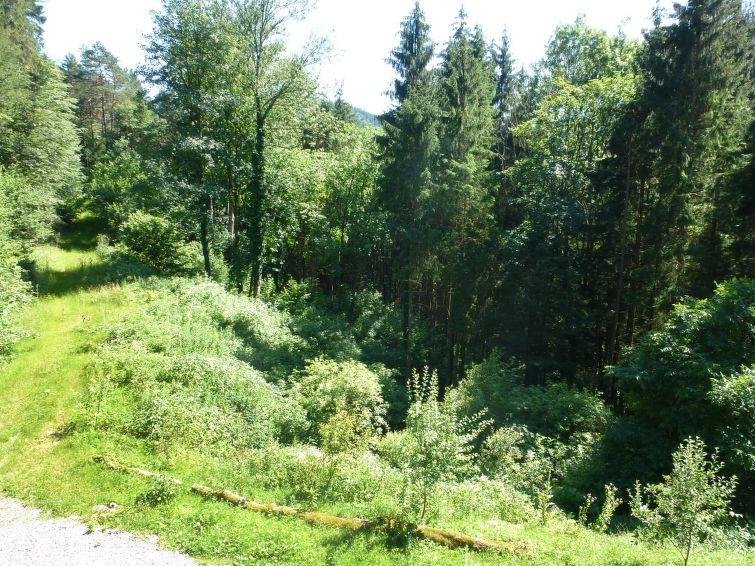 Wolfach(Wolf), Oberwolfach, Baden-Württemberg, Germany