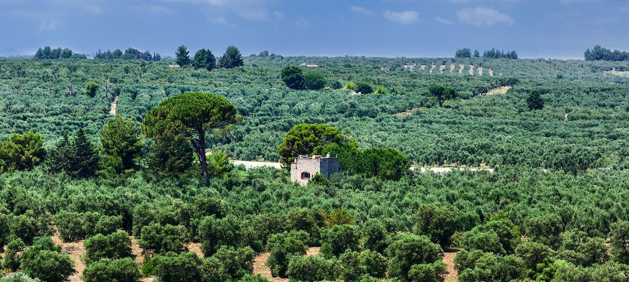 Andria, Barletta-Andria-Trani, Puglia, Italy