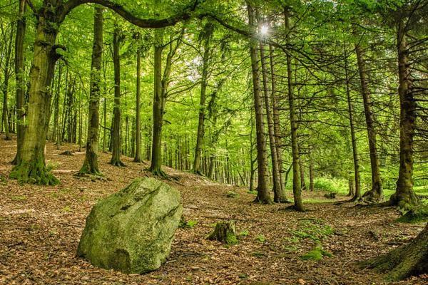 Hörselberg-Hainich, Thüringen, Deutschland