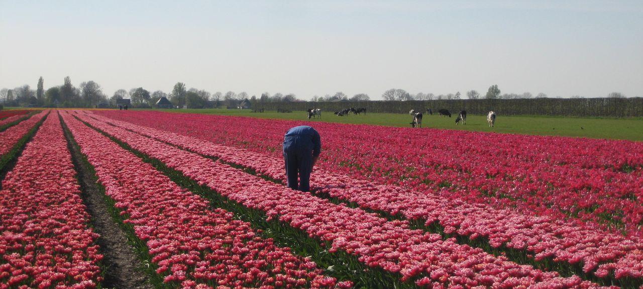 Medemblik, Netherlands