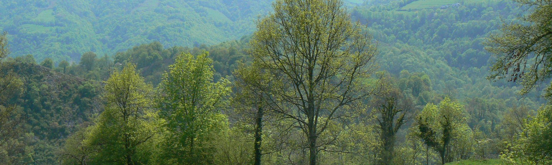 Bunus, Aquitaine Limousin Poitou-Charentes, Frankrig