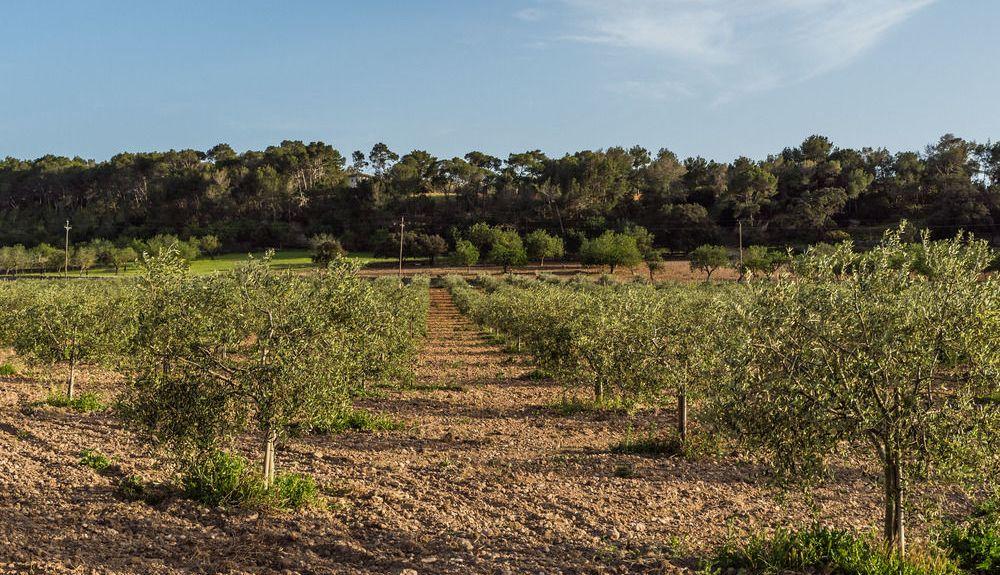 Son Ferriol, Balearische Inseln, Spanien