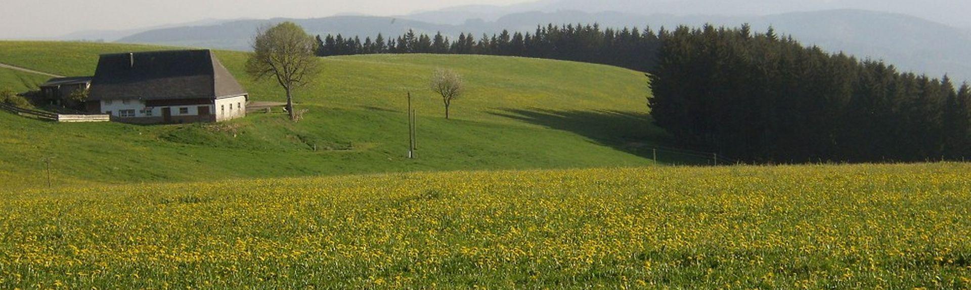 Badeparadies Schwarzwald, Titisee-Neustadt, Baden-Württemberg, Deutschland