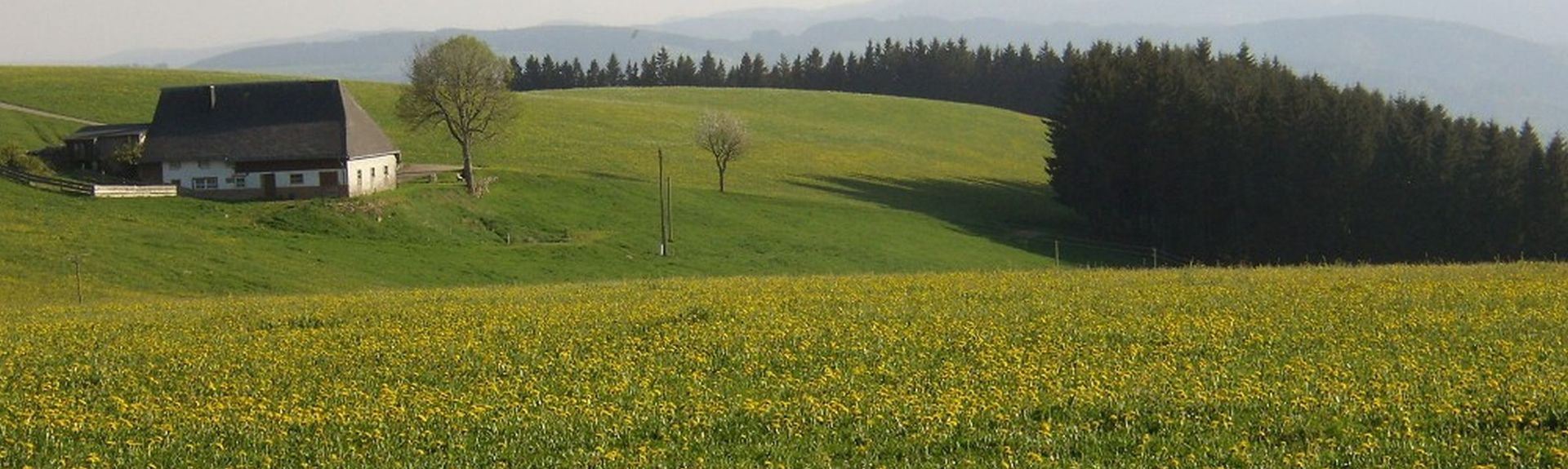 Badeparadies Schwarzwald, Titisee-Neustadt, Baden-Wuerttemberg, Duitsland