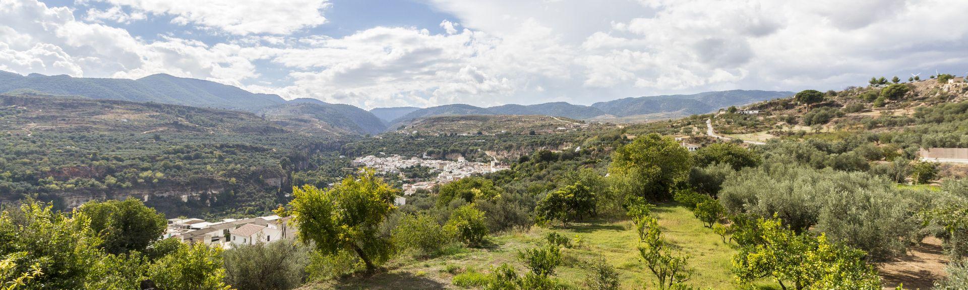 Cónchar, Andalusia, Spain