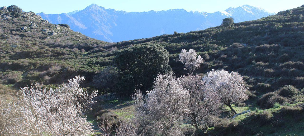 Occhiatana, Corsica, France