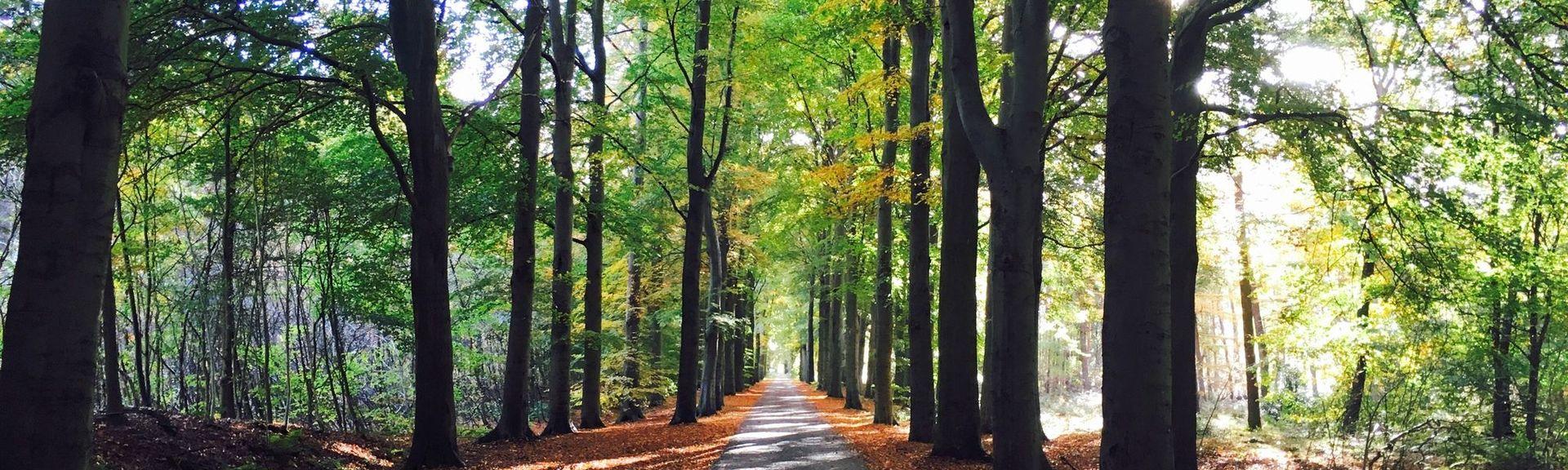 Boijl, Friesland, Netherlands