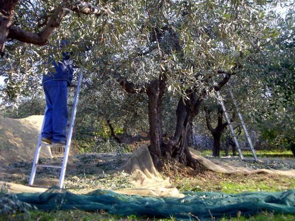 Capraia e Limite, Toscana, Italia