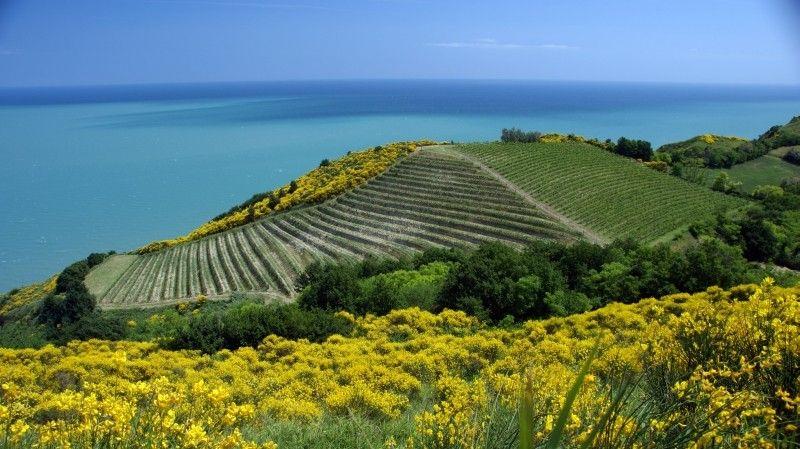 Provincia di Pesaro e Urbino, Marche, Italia