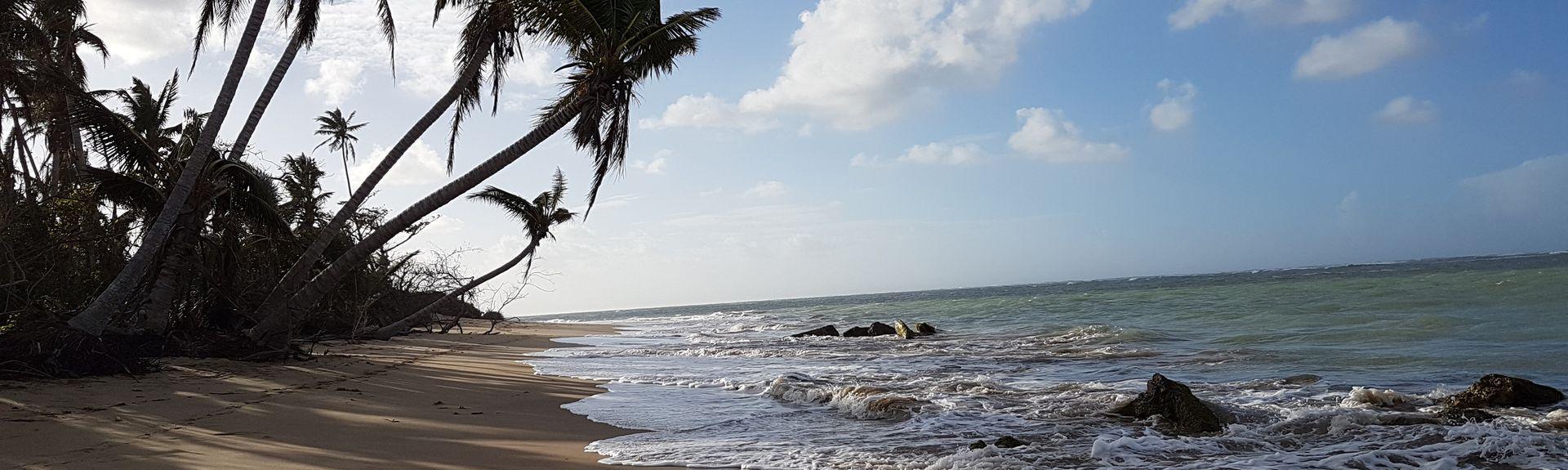 Guzmán Abajo, Rio Grande, Puerto Rico