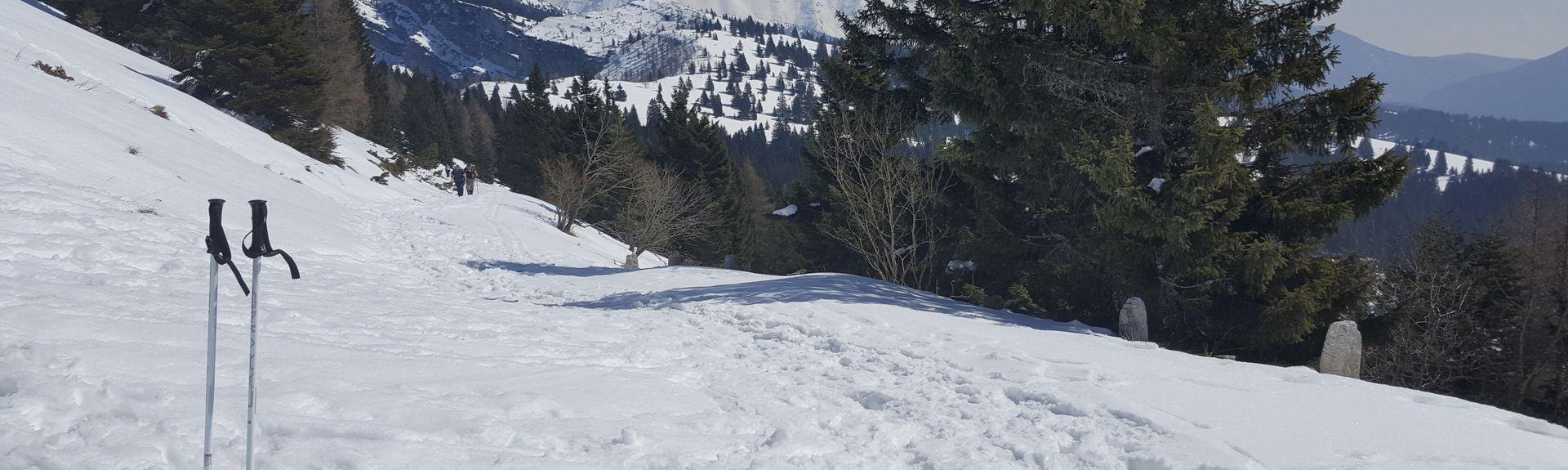 Skigebied Cavalese, Cavalese, Trentino-Zuid-Tirol, Italië