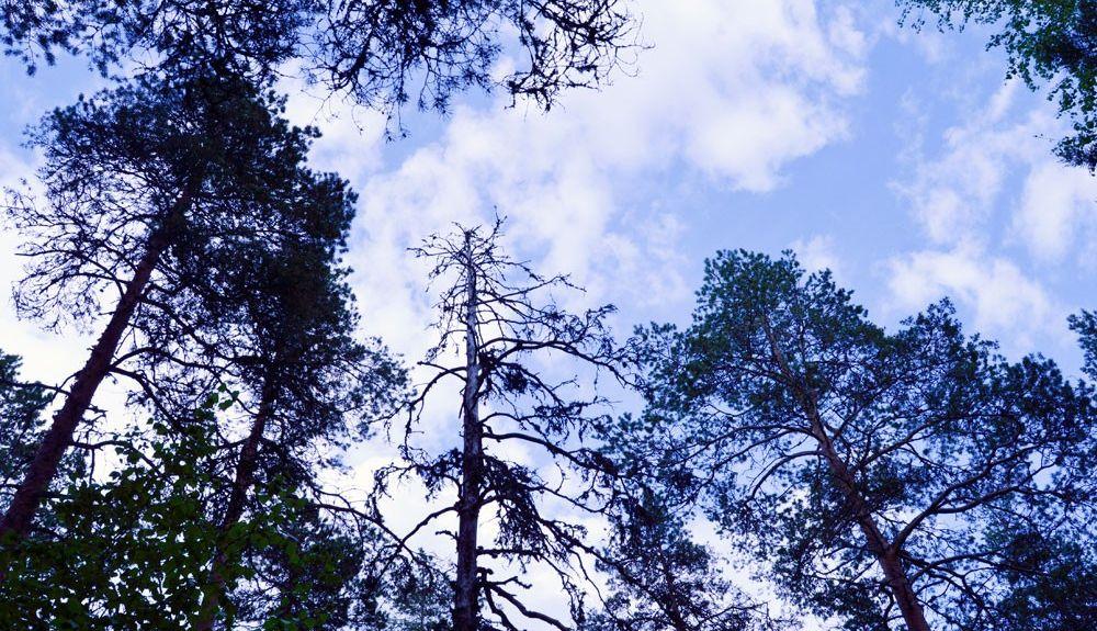 Ylä-Pirkanmaa, Pirkanmaa, Finlande