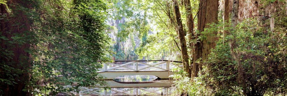 Magnolia Plantation and Gardens, Charleston, South Carolina, USA