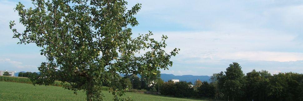 Waldenbuch, BadeniaWirtembergia, Niemcy