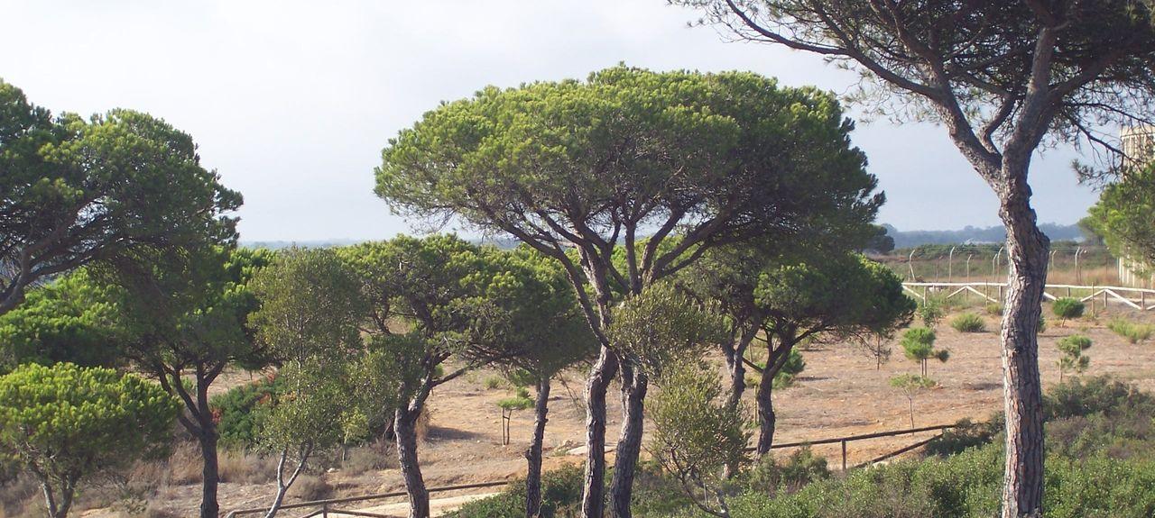 Plage de Conil de la Frontera, Conil de la Frontera, Andalousie, Espagne