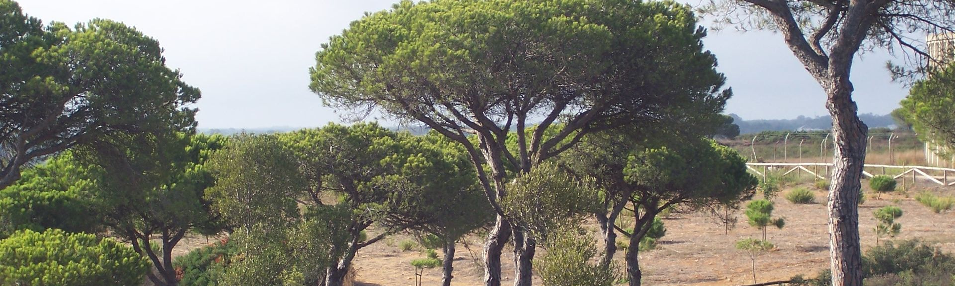 Playa de Conil, Conil de la Frontera, Andalucía, España