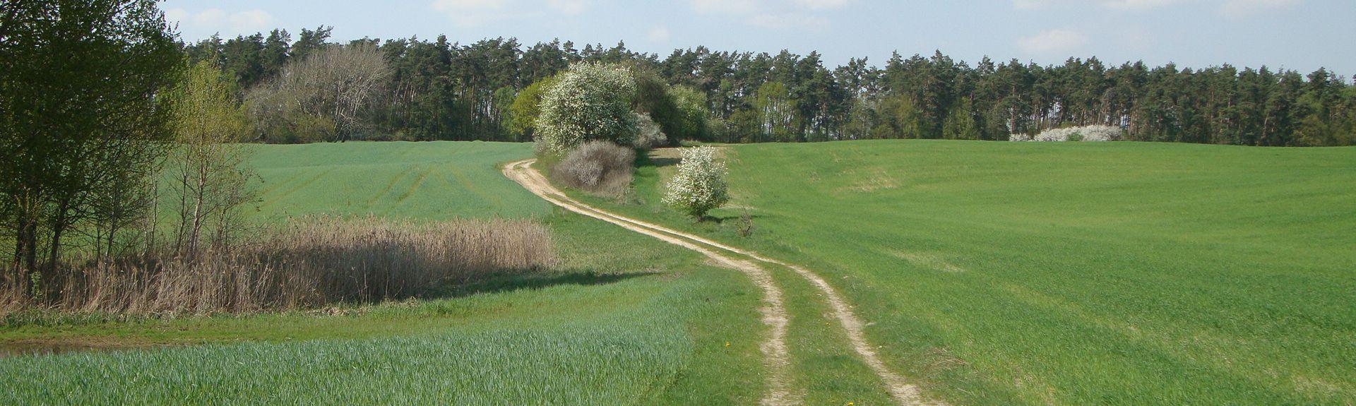 Herzfelde, Templin, Brandenburg Region, Germany