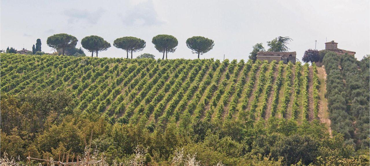 Greve in Chianti, Toscana, Italia