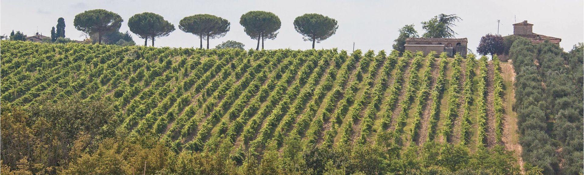 Greve in Chianti, Toscana, Italien