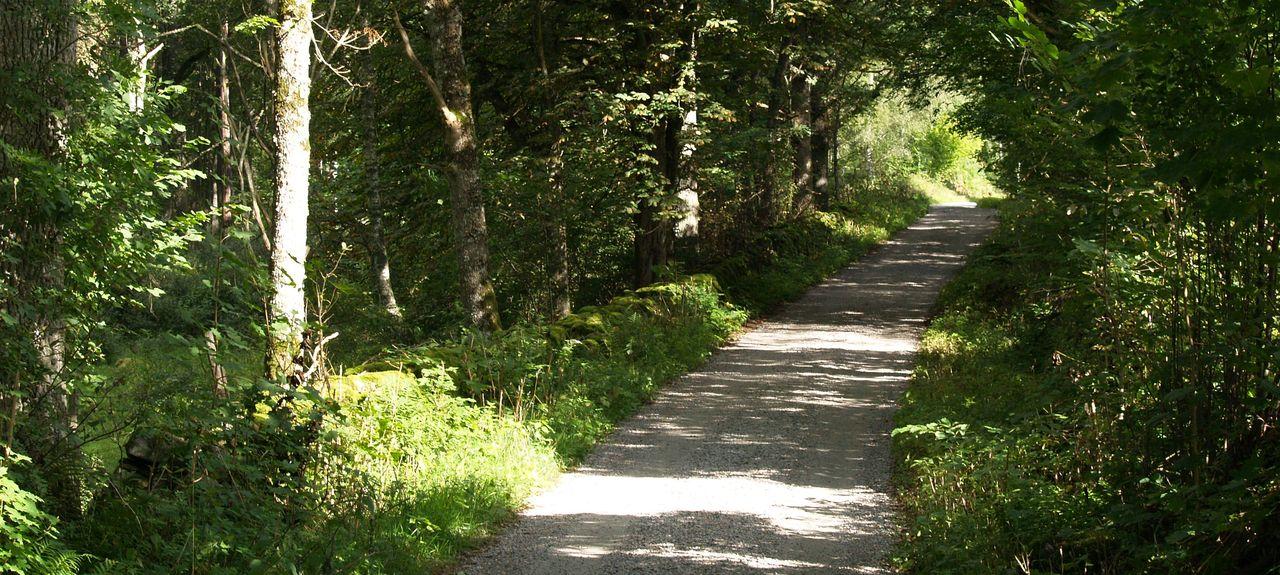Smalandet Moose et parc des bisons, Comté de Scanie, Suède