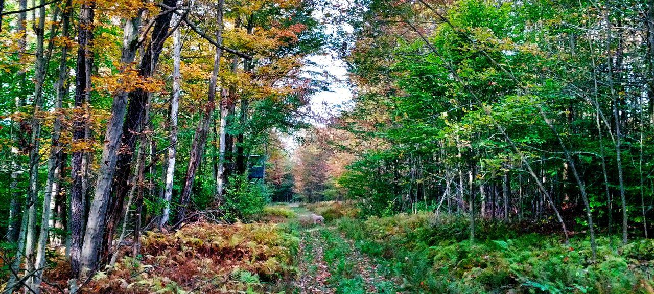 Cedar Run, Pennsylvanie, États-Unis d'Amérique
