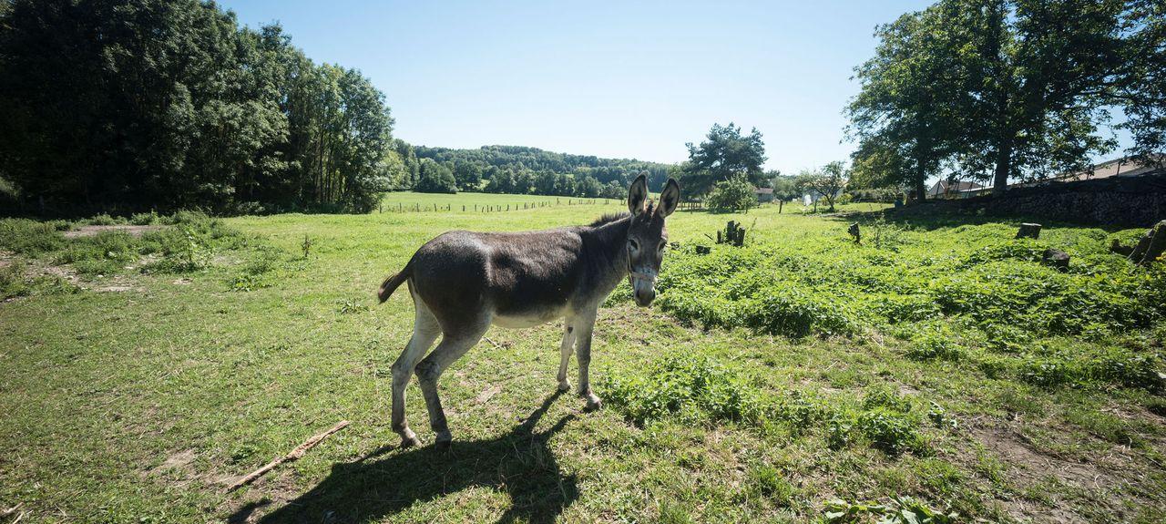 Vittel, Alsace-Champagne-Ardenne-Lorraine, France