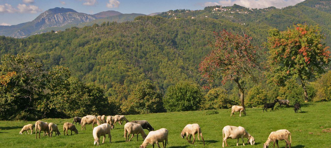 Gragnana, Lucca, Tuscany, Italy