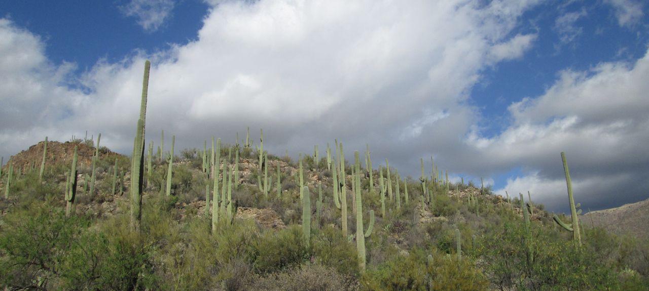 Palo Verde, Tucson, AZ, USA