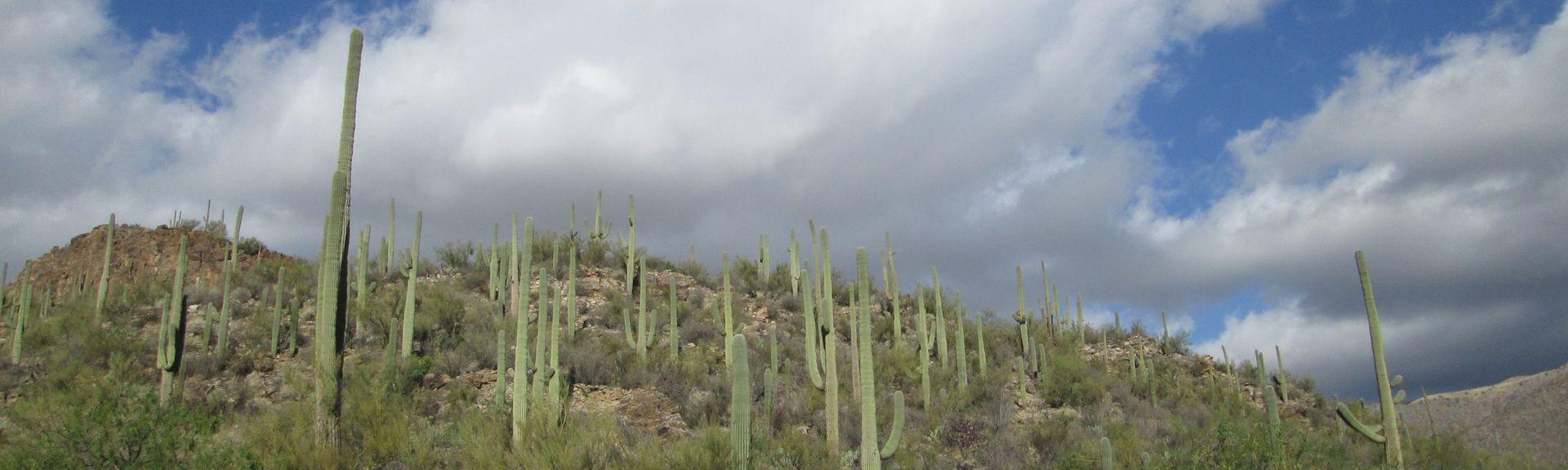 Palo Verde, Tucson, Arizona, Estados Unidos