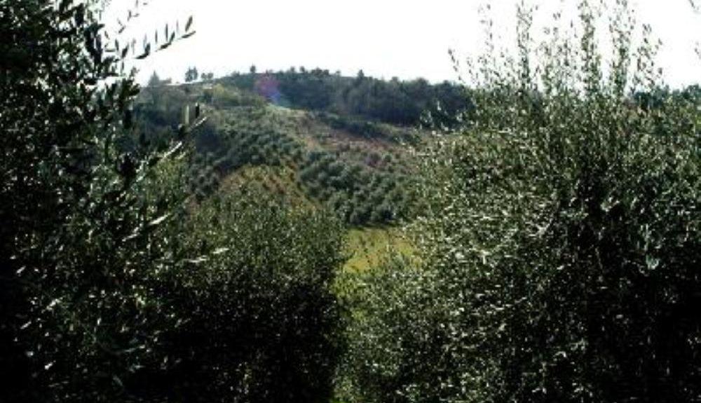 Monteguiduccio, Pesaro and Urbino, Marche, Italy