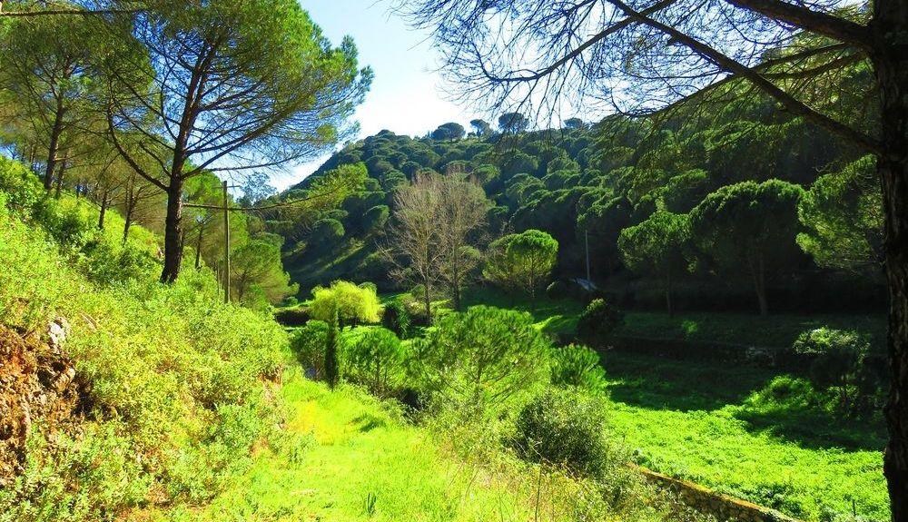 Moita, Leiria District, Portugal