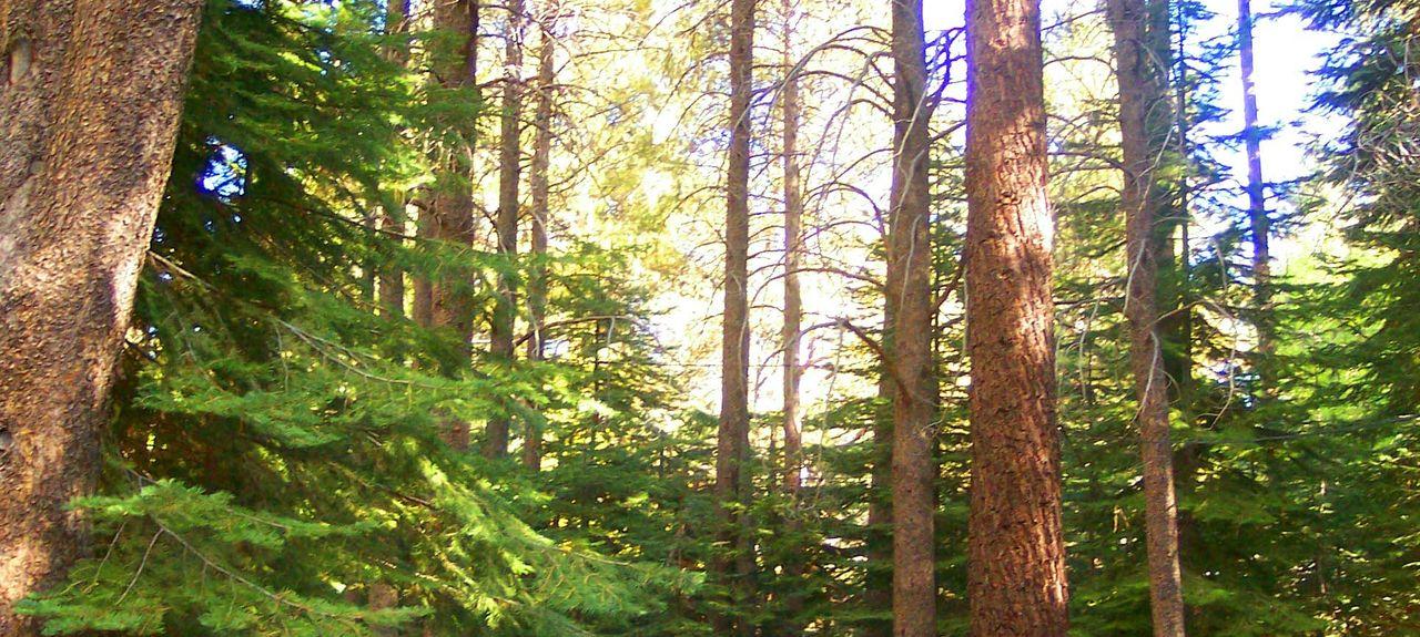 Tahoe Valley, South Lake Tahoe, Kalifornien, Vereinigte Staaten