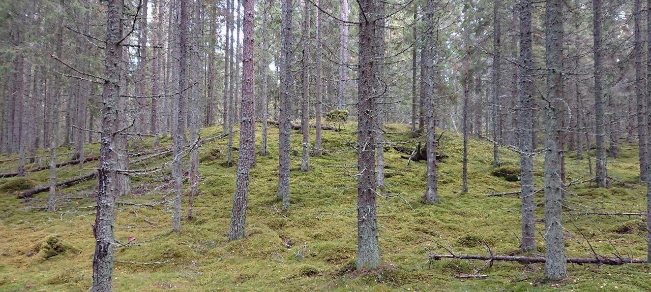 Askersund V, Comté d'Örebro, Suède