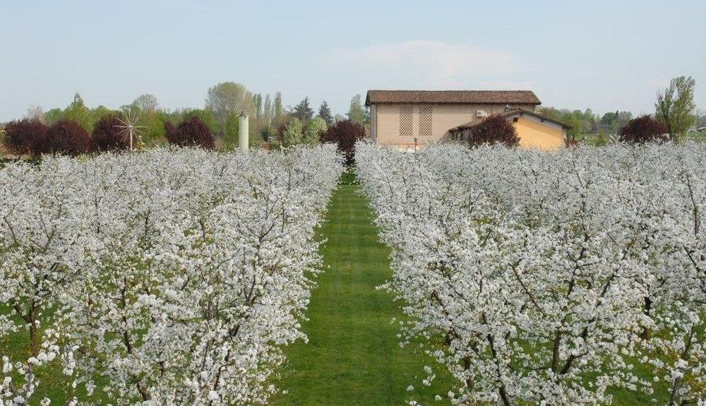Soliera, Modena, Emilia-Romagna, Italy