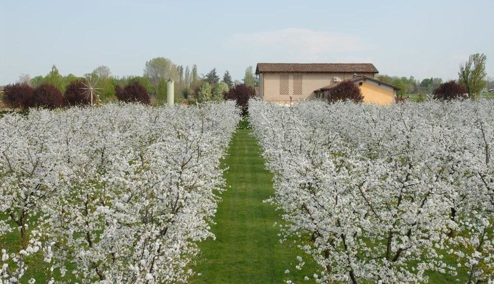 Castelfranco Emilia, Modena, Emilia-Romagna, Italy