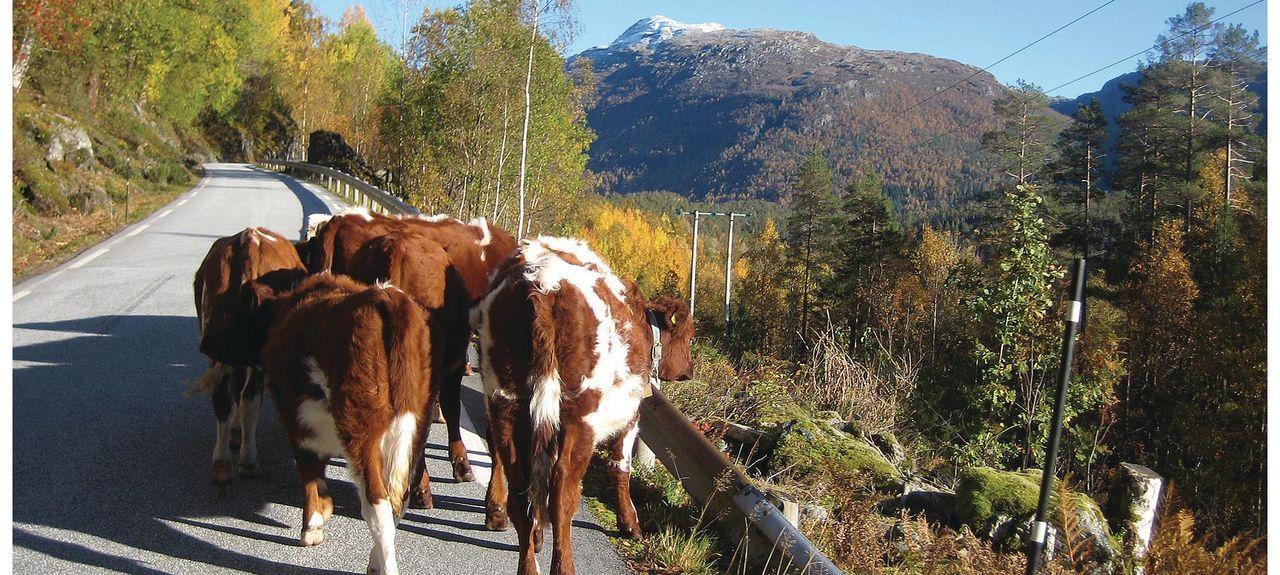 Florø, Sogn og Fjordane (Provinz), Norwegen