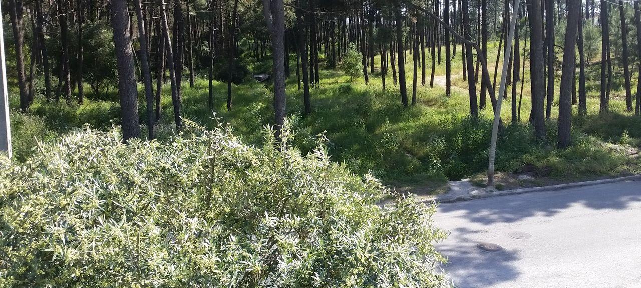 Poço Novo, Charneca de Caparica e Sobreda, Setúbal, Portugal