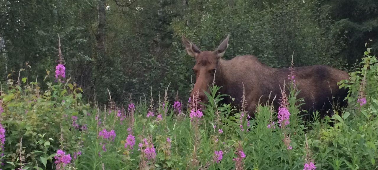 Nancy Lake, Willow, Alaska, Stati Uniti