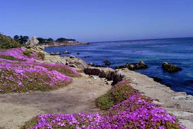 Asilomar State Beach, Pacific Grove, CA, USA