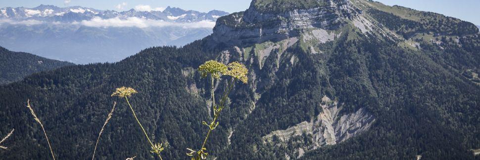La Cote-Saint-Andre, Auvergne-Rhône-Alpes, Frankrike