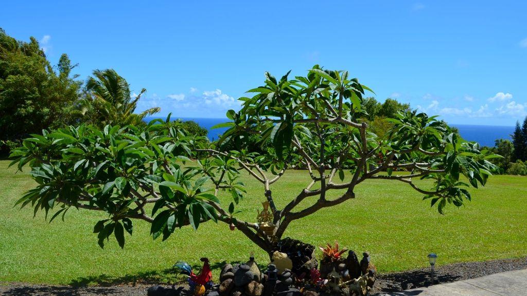 Keanae, Hawaï, États-Unis d'Amérique