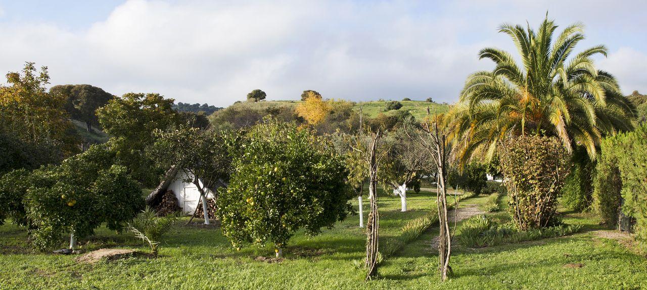 Campiña Sur, Córdoba, Spain