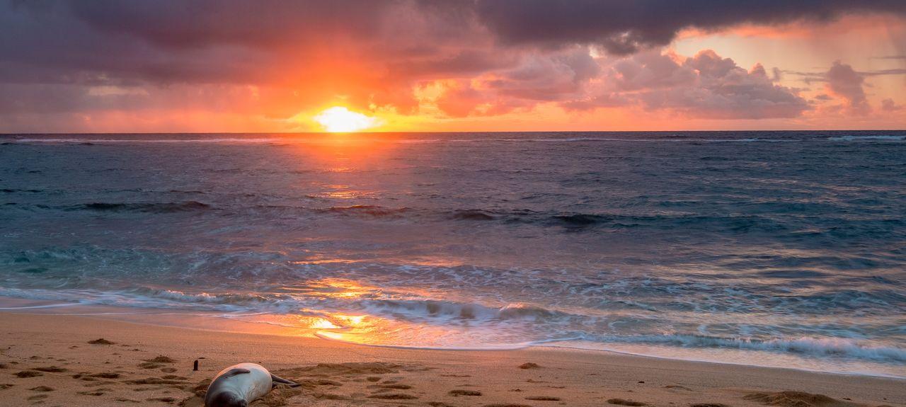 Lihue-Koloa Forest Reserve, Kauai Island, HI, USA