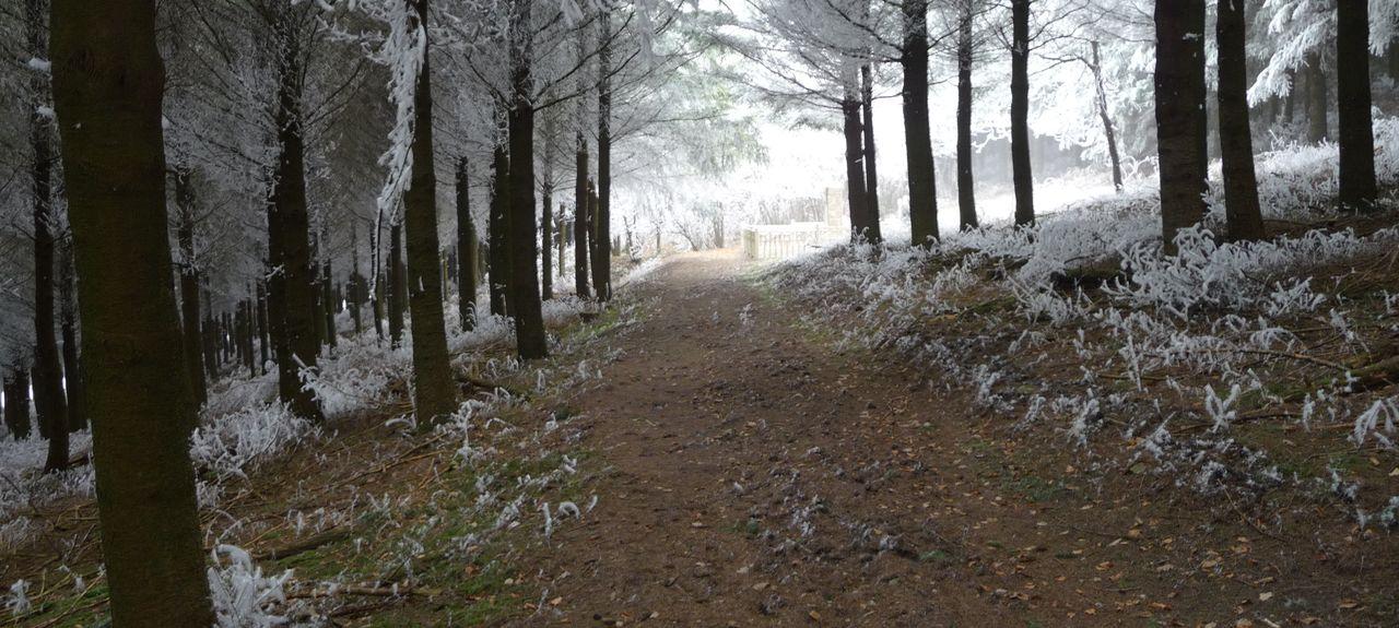 Salvizinet, Auvergne-Rhône-Alpes, France