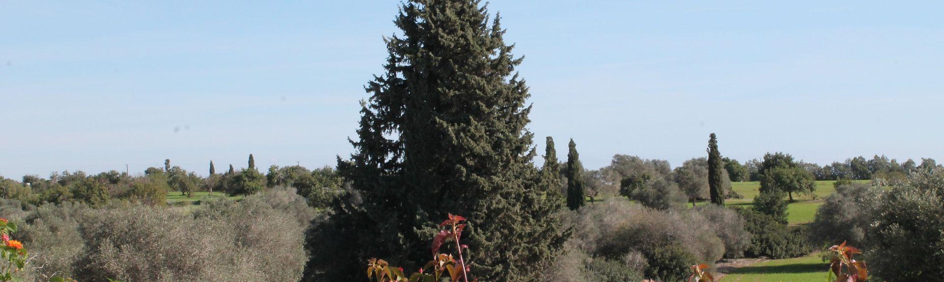 Perivolia, Larnaca, Cyprus