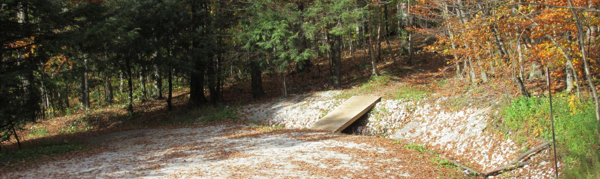 Gifford Woods State Park, Killington, Vermont, USA