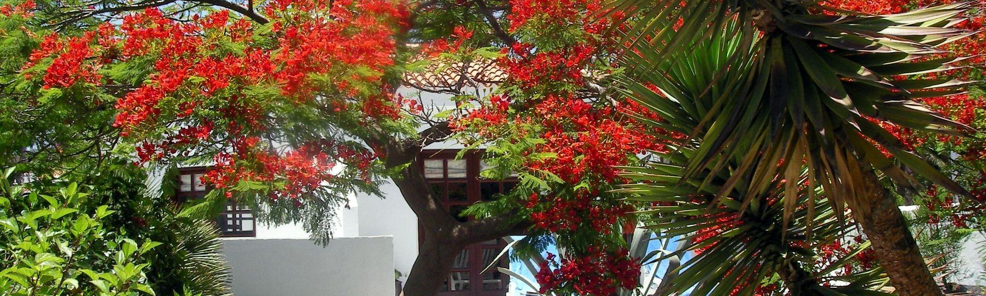 Nuevo Horizonte, Las Palmas, Spain