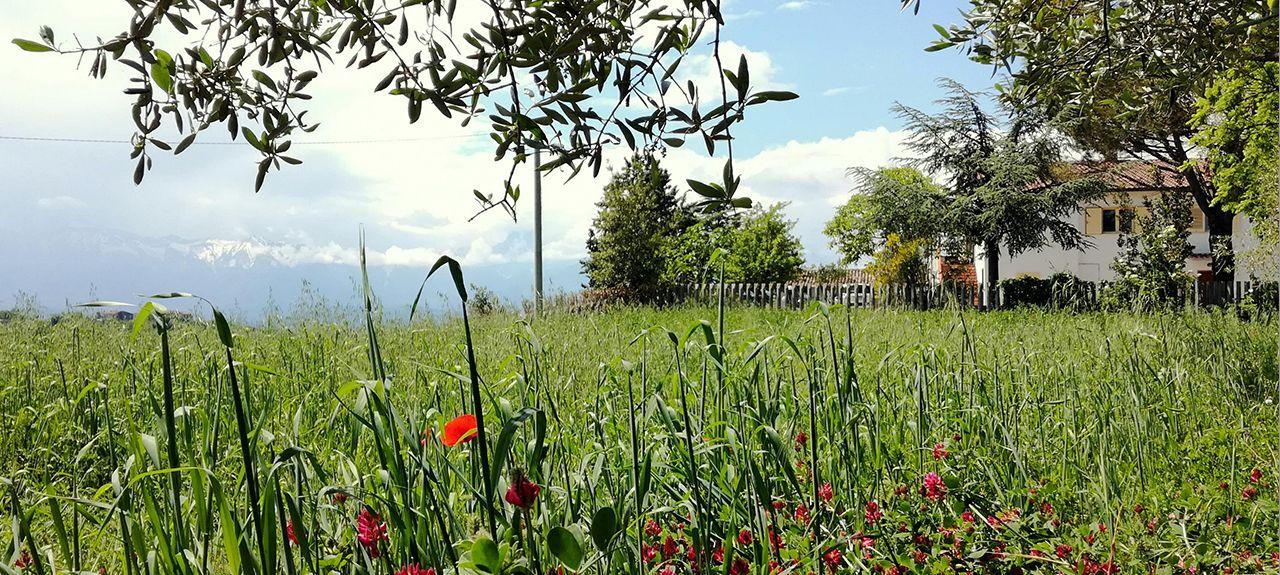Montorio al Vomano, Teramo, Abruzzo, Italy